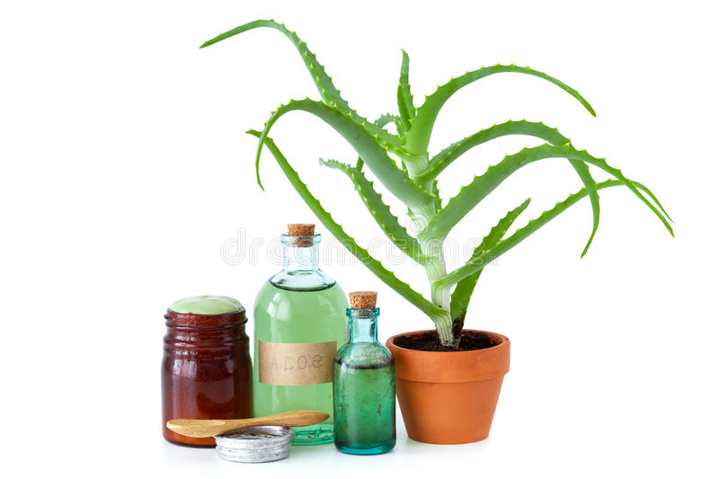 Aloe plant, aloe vera essence, cream and other products on white. stock photos