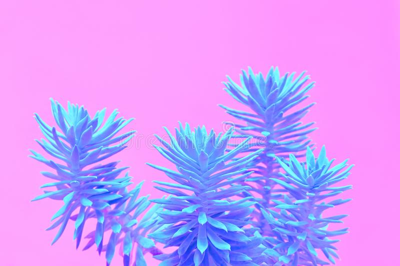 Aloe plant on Blue. Minimal. Concept Art Style. Fashion Neon tropical aloe in Blue Color. Minimal Trendy stillife on Pink Design background. Art concept. Close royalty free stock images