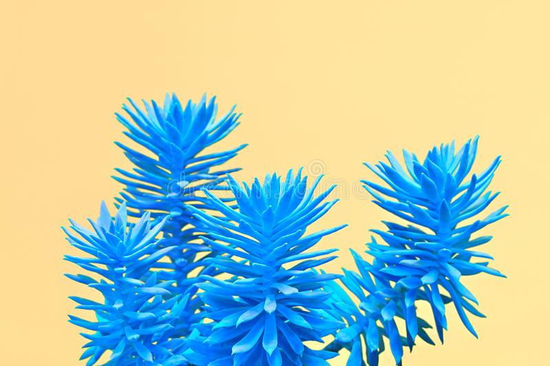 Aloe plant on Blue. Minimal. Concept Art Style. Fashion Neon tropical aloe in Blue Color. Minimal Trendy stillife on yellow Design background. Art concept stock photography