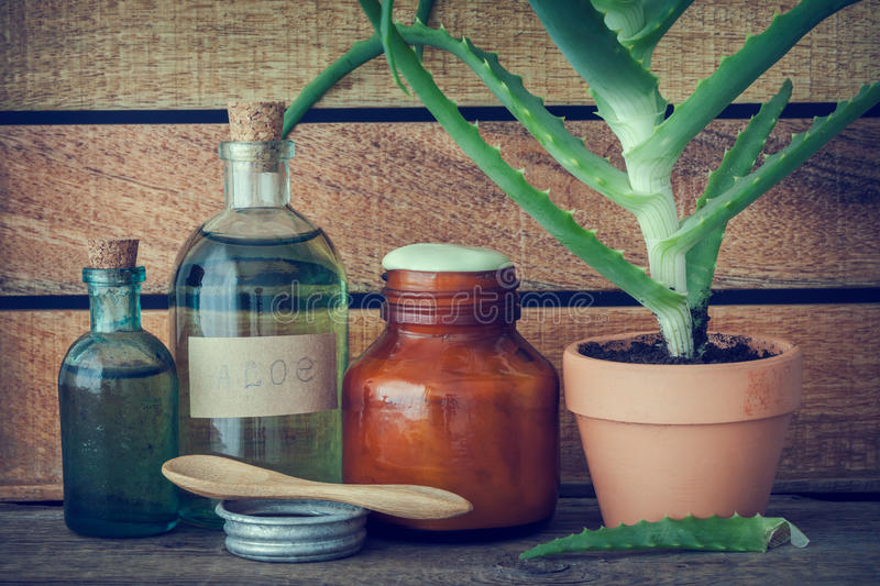 Aloe plant in pot, bottle of aloe vera essence and ointment. royalty free stock photo