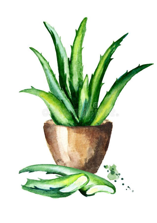 Isolated Aloe Plant stock vector. Illustration of ...