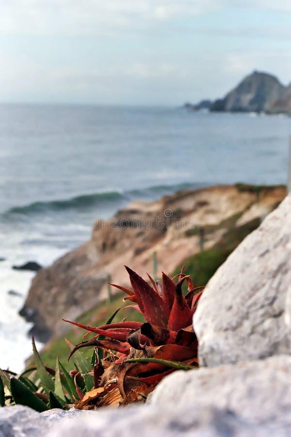 Download Aloe planterar vera arkivfoto. Bild av rött, vatten, floror - 279344