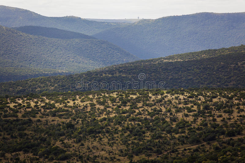 Download Aloe Trees Wild Terrain stock image. Image of africa - 26043739