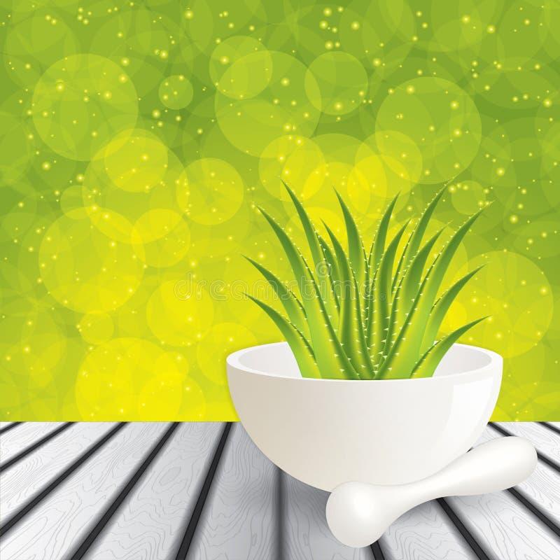 Aloe Vera stock abbildung