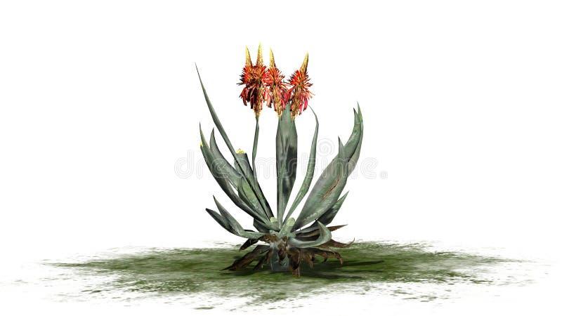 Aloe-Vera-Anlage auf einem Grünstreifen stock abbildung