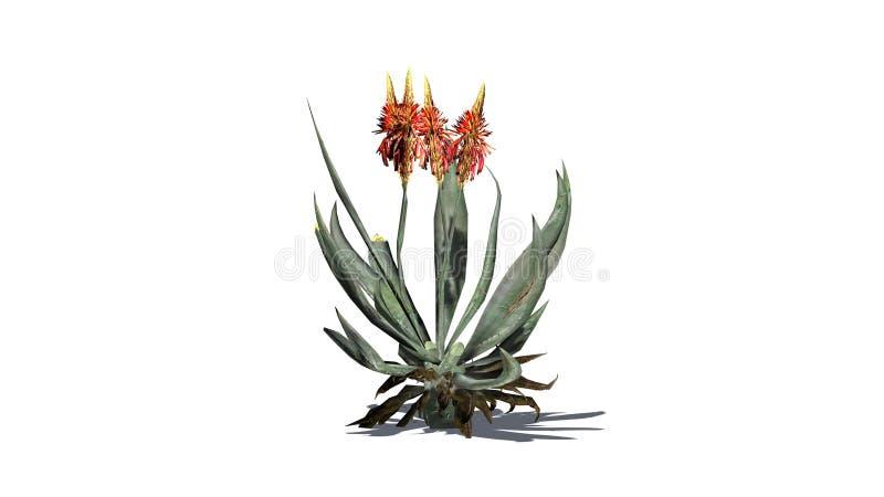 Aloe-Vera-Anlage mit Schatten lizenzfreie abbildung