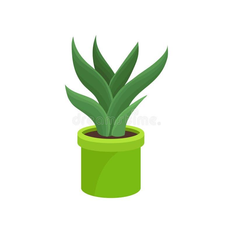 Aloe Vera In Bright Green Ceramic Pot. Medical Plant. Houseplant For ...