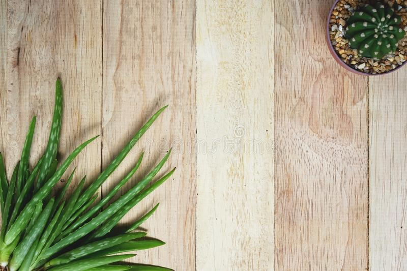 Aloe vera and cactus on wooden table background, copy space, skin care concept royalty free stock images