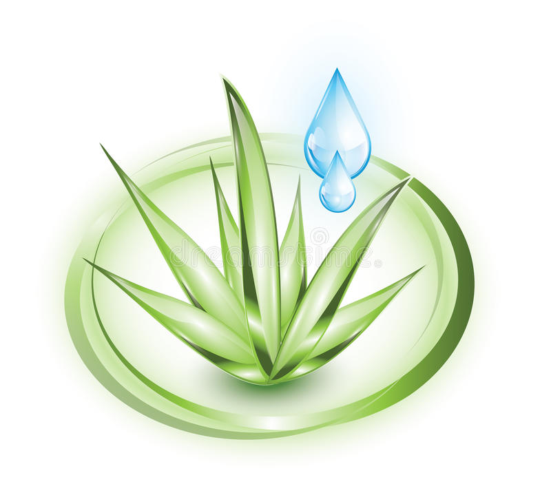 Aloe vera with droplets. Aloe vera plant with blue glossy droplets in green circles royalty free illustration