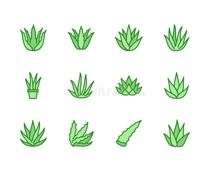 Aloe vera flat line icons. Succulent, tropical plant vector illustrations, thin signs for organic food, cosmetic. Pixel. Perfect 64x64. Editable Strokes stock illustration
