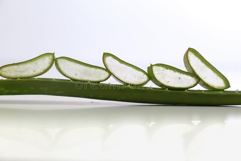 Aloe vera fresh leaf isolated on white background stock photography