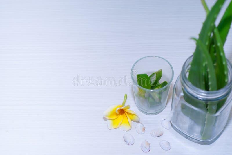 Aloe Vera-frisches Blatt lizenzfreie stockfotos
