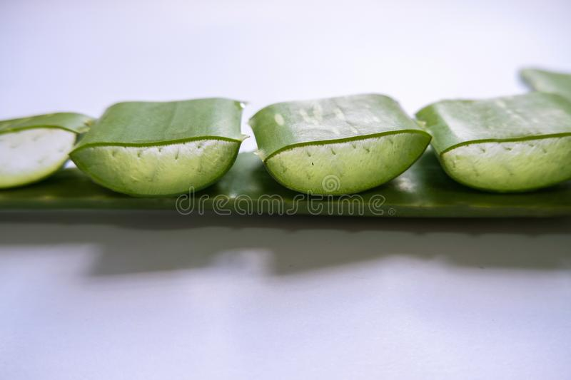 Aloe vera Gel that has both substances to cure scars And used to produce health drinks Or cosmetics that are good for the skin.  royalty free stock image
