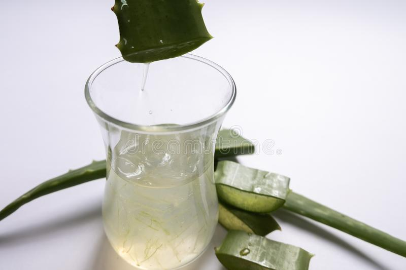 Aloe vera Gel that has both substances to cure scars And used to produce health drinks Or cosmetics that are good for the skin.  royalty free stock photography