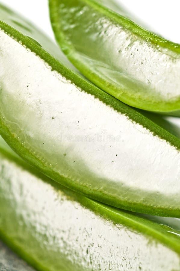 Aloe Vera geschnitten. stockfotos