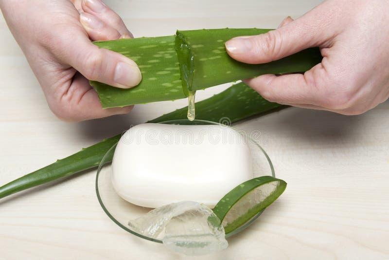 Aloe Vera. Health-care and body treatment with aloe vera soap royalty free stock photo