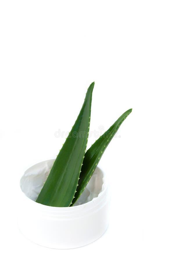 Aloe vera leaves and cream stock image