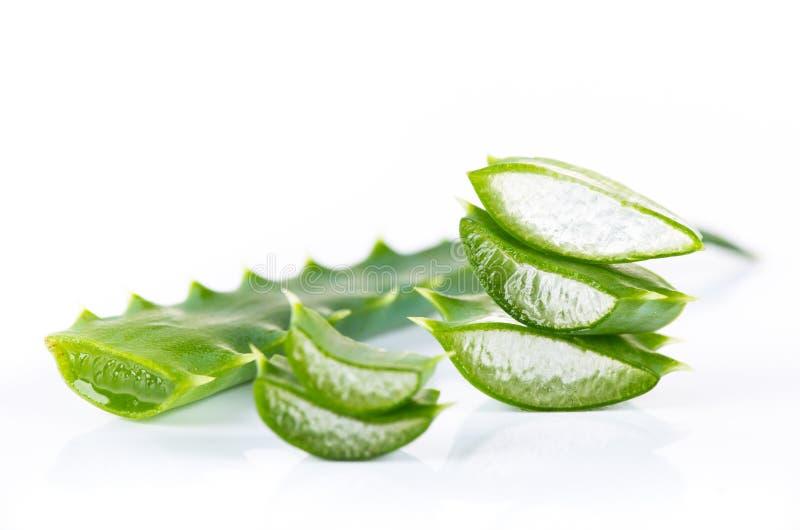 Aloe Vera leaves. On white background stock photos