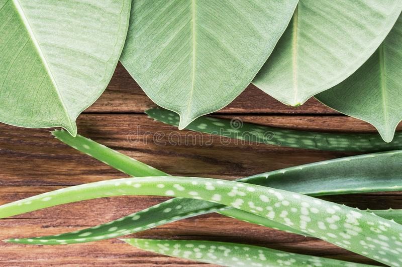 Aloe vera leaves on wooden table. Natural cosmetic ingredients with copy space. Fresh aloe vera plant on wooden board, flat lay. S stock images