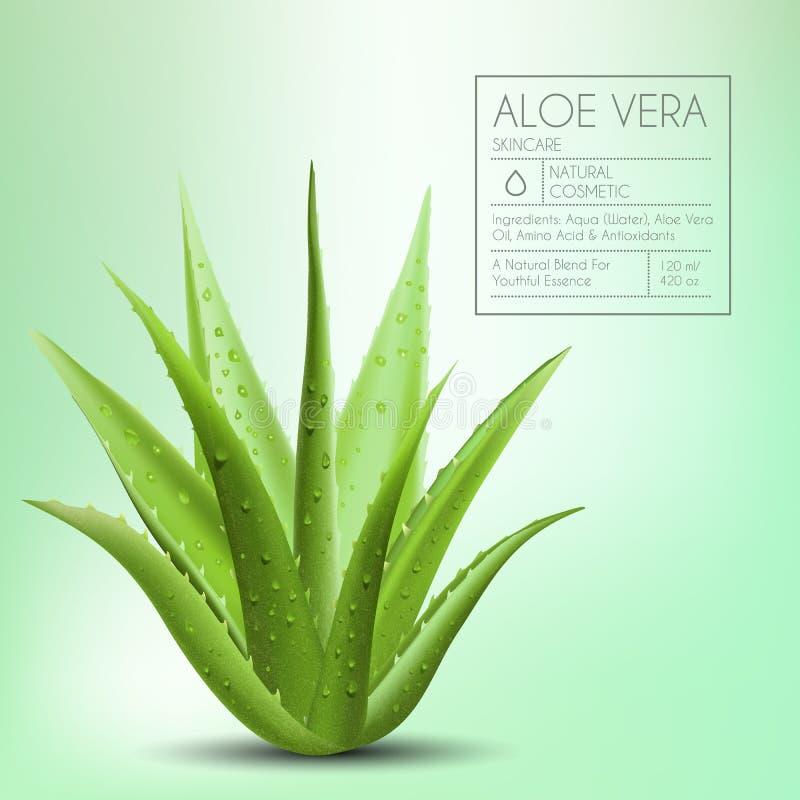 Aloe Vera mit neuen Wassertropfen lizenzfreie abbildung