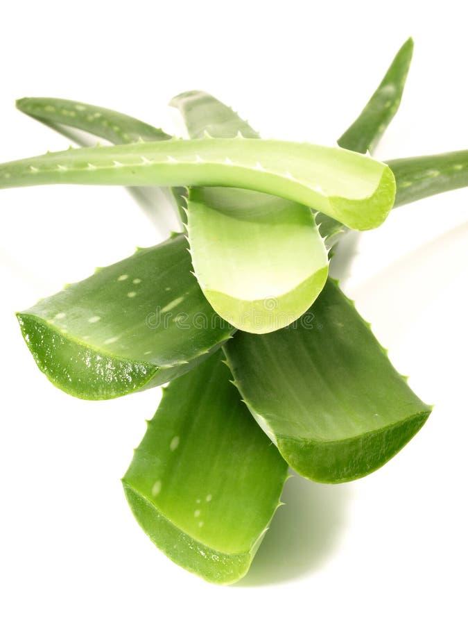 Aloe Vera - nutrizione sana immagine stock libera da diritti