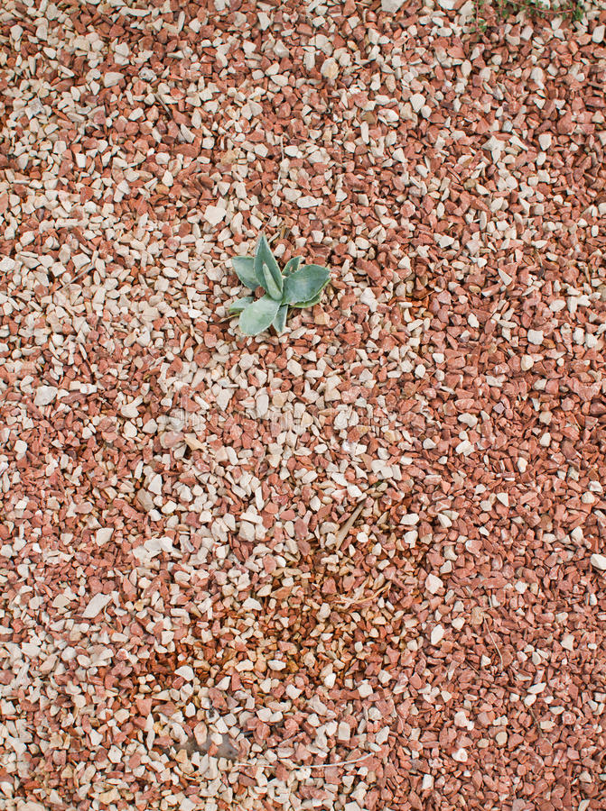 Download Aloe vera over stone stock image. Image of closeup, sharp - 26811909
