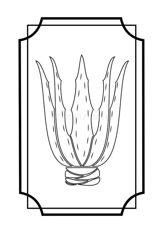 Aloe vera Pianta medicinale nella medicina Immagine grafica Hobby piacevole e senza pretese per i collettori dei cactus Maschera  illustrazione di stock