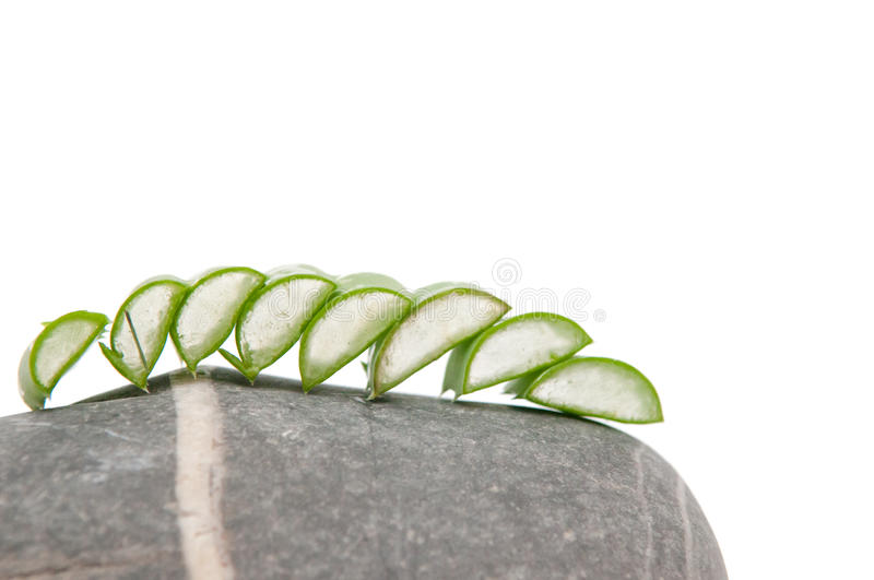 Aloe vera plant on stone stock photo