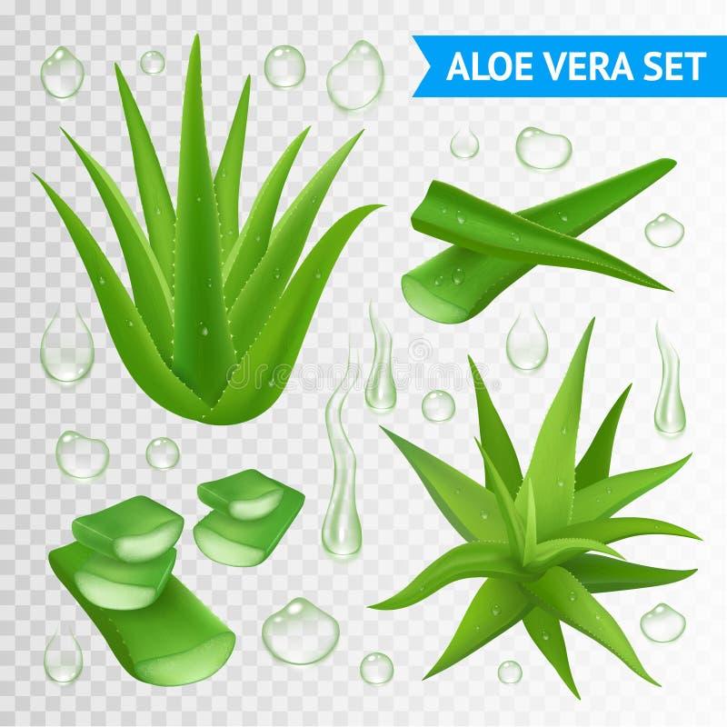 Aloe Vera Plant On Transparent Background stock illustrationer