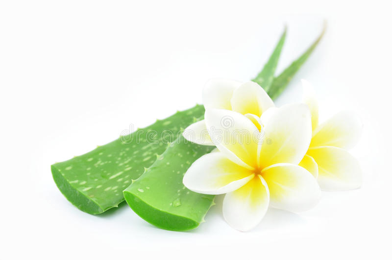 Aloe vera and plumeria. Aloe vera and plumeria decorated for a spa or skin cream is placed on a white background stock photo