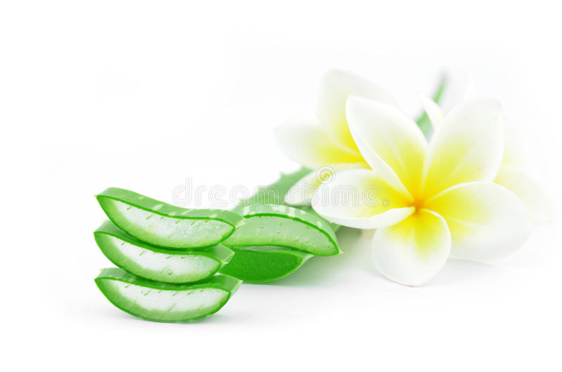 Aloe vera and plumeria. Aloe vera and plumeria decorated for a spa or skin cream is placed on a white background royalty free stock photography