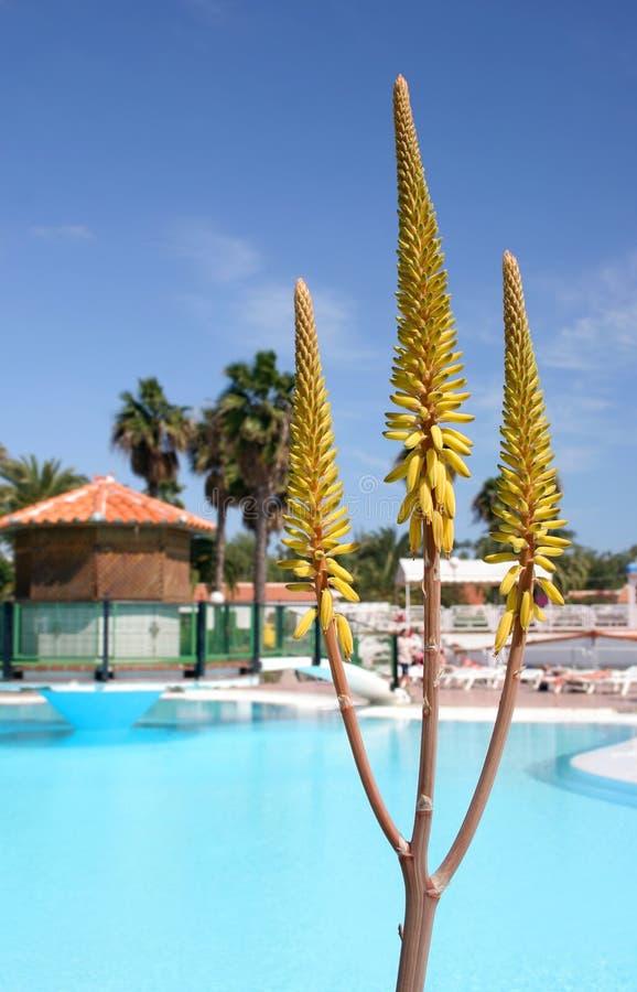 Aloe Vera Pool royalty free stock photo