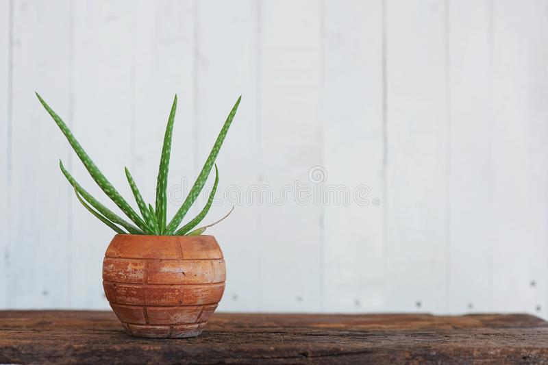 Aloe vera pot plant on wood table with white wooden wall background royalty free stock photography