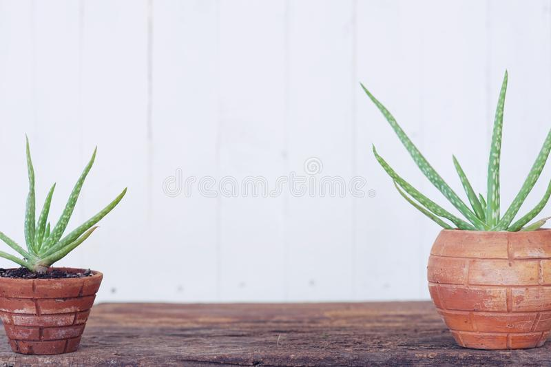 Aloe vera pot plant on wood table with white wooden wall background royalty free stock images
