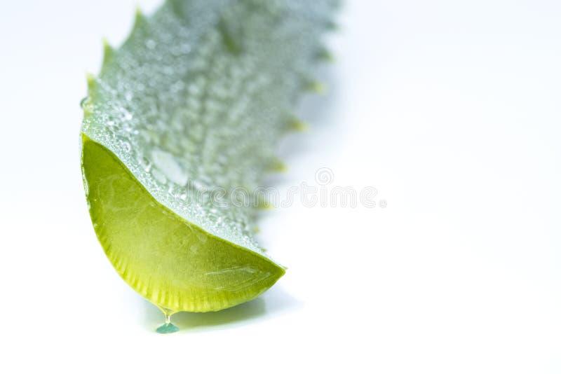 Aloe vera slices. Organic aloe vera slices on white background royalty free stock photo