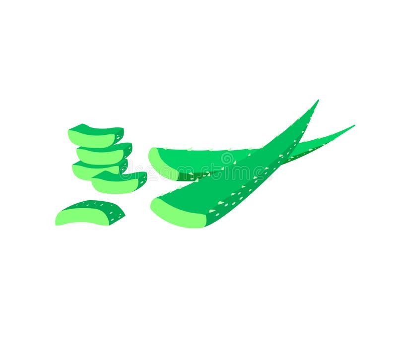 Aloe vera som isoleras p? vit bakgrund aloe gr?na vera royaltyfri illustrationer
