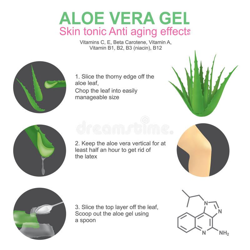 Aloe Vera gel. Skin tonic anti aging effects. Aloe vera is a succulent plant species of the genus Aloe. It grows wild in tropical climates around the world and royalty free illustration