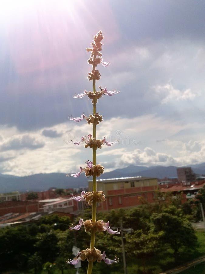 Aloeblomma royaltyfria foton