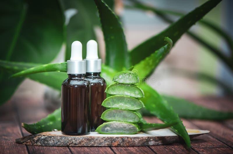 Aloeolja, saftigt scharlakansr?tt snitt in i stycken p? en naturlig tr?bakgrund royaltyfri illustrationer