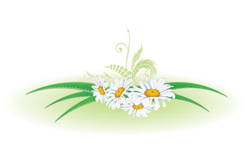 Aloes i stokrotka ilustracja wektor