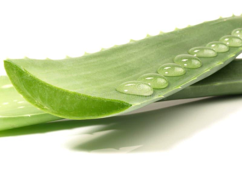 Aloes Vera - Zdrowy odżywianie obraz royalty free
