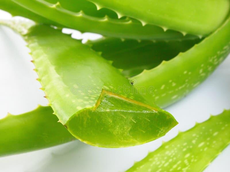 Aloes Vera - Zdrowy odżywianie zdjęcie stock