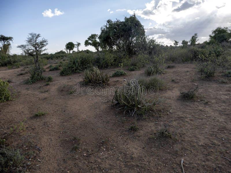 Aloesu mcloughlinii, miejscowość, Zgubny Dawa, południowy Etiopia obraz royalty free