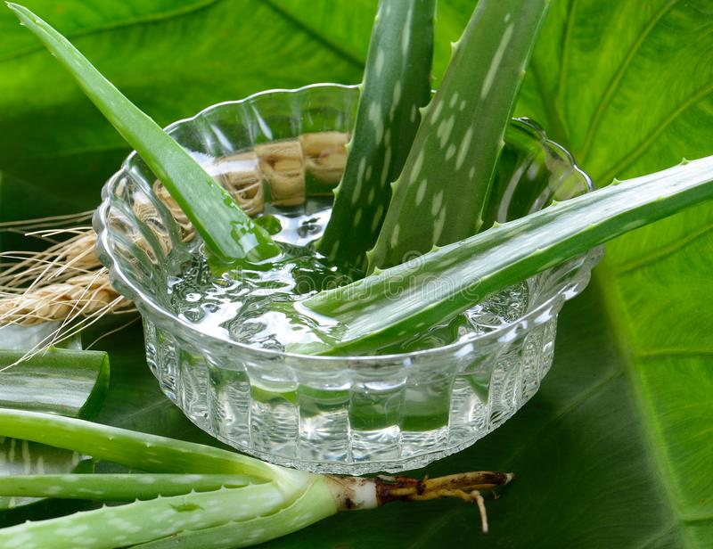 Aloesu Vera gel w pucharze na z drewnianym stołem fotografia royalty free