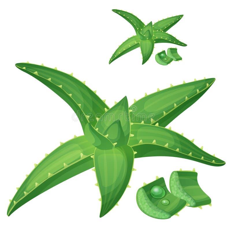 Aloesu Vera ro?liny ilustracja Kresk?wka wektoru ikona zdjęcie stock