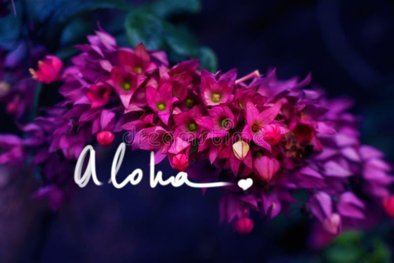 Aloha com uma divisa da escrita do coração em uma foto fotos de stock royalty free