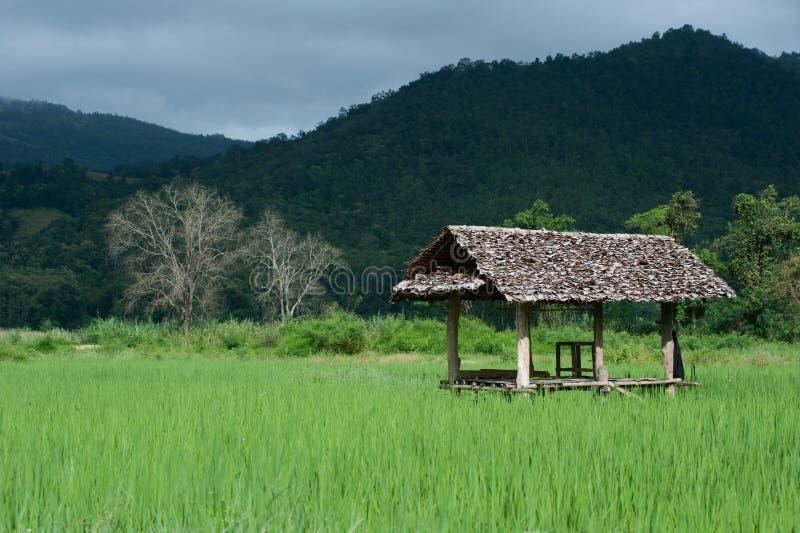 Alojamiento en el campo del arroz. fotografía de archivo