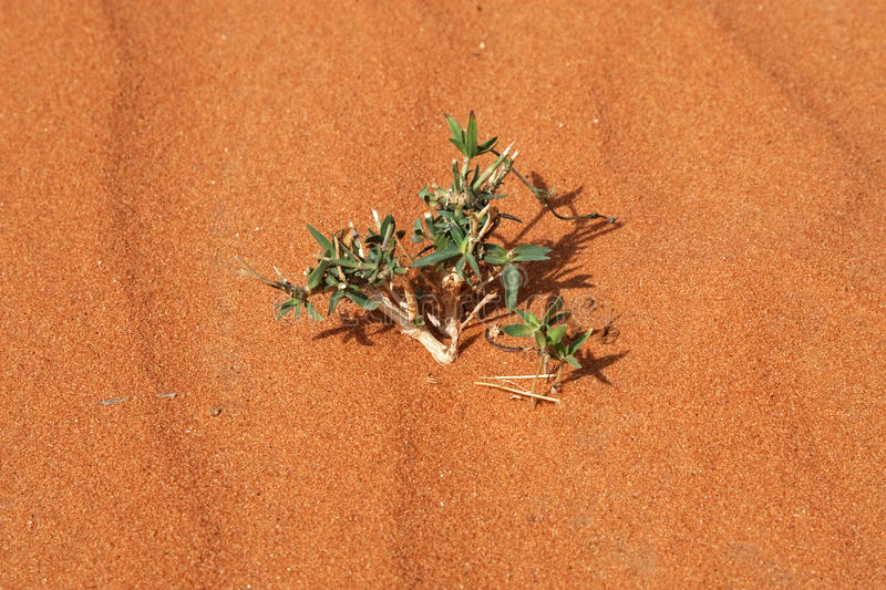 Download Alone stock image. Image of solitude, thorn, green, precious - 13338233