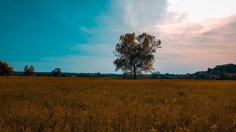 Alone fotografie stock