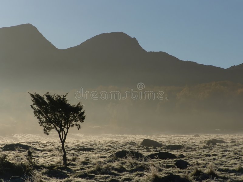 Download Alone stock photo. Image of lonely, autumn, tree, fall, single - 42880